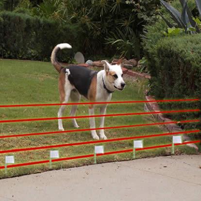 Electronic Fence
